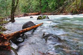 Log on a River