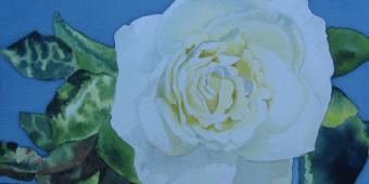 White Rose by Deborah Olenev